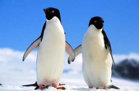 la prova del pinguino